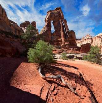 Druid Arch and Tree Root The twisted tree root and red dirt lead to the amazing Druid Arch. Druid Arch towers over the Needles district in Canyonlands. This unique and picturesque arch rewards hikers with an incredible, scenic view, special to the Southwest.
