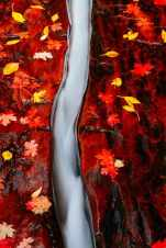 Crack and Autumn Leaves