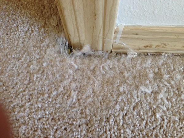 Seattle carpet repairs before