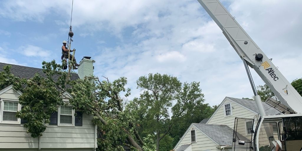 The Alpine Tree crew works to remove a fallen tree from a house's roof after a storm.