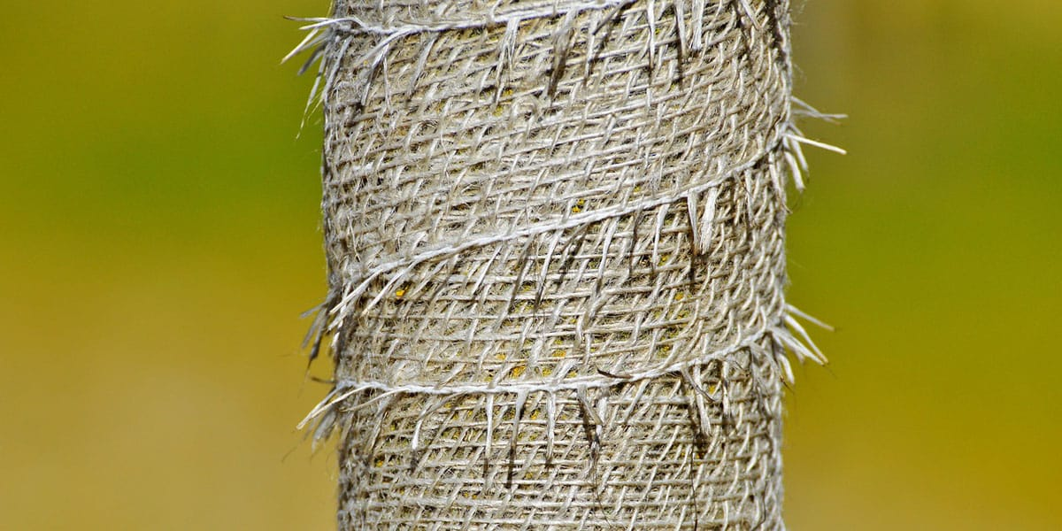 a tree trunk wrapped in burlap for protection
