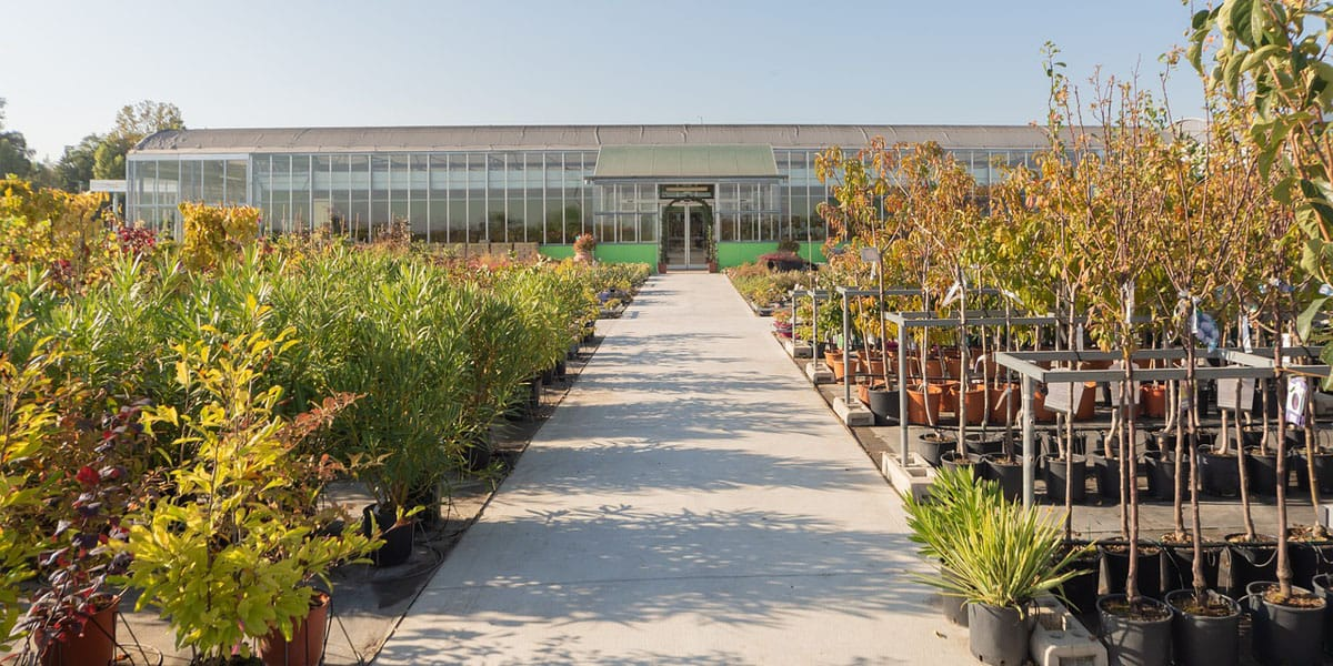 trees and shrubs at a plant nursery