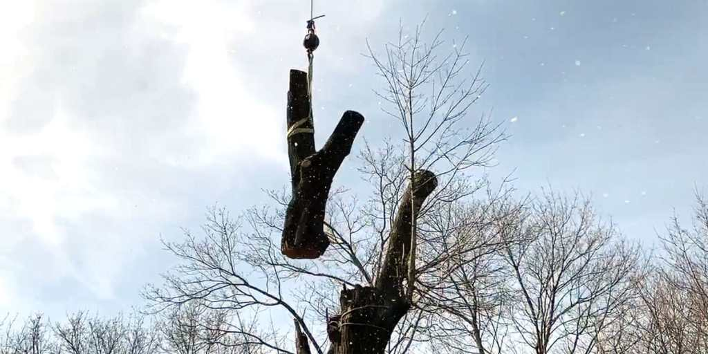 tree top being lifted by a crane