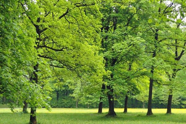 green trees in a field