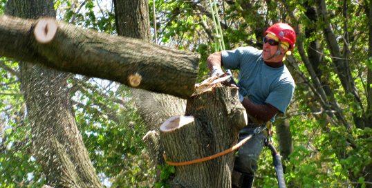 Спил деревьев арбористами