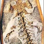 Del Homo diluvii testis y un montón de piedras