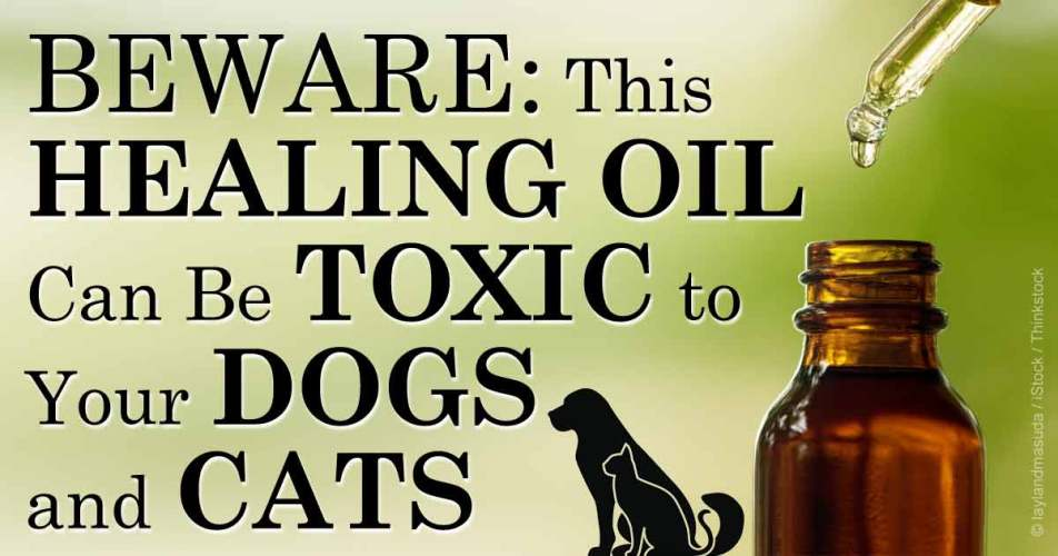 Careful with medicine, alternative treatments, and pets.