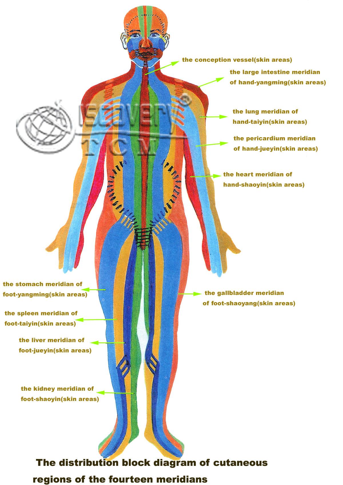 Tcm Acupuncture Re Enerqi Yoga Detox Tcmassage Getaways