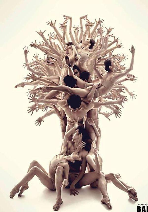 Construye un árbol de relaciones y alianzas