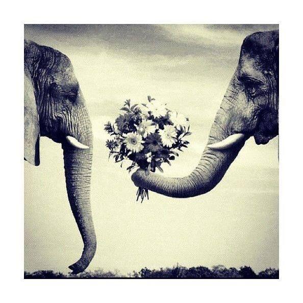 Cultivar las relaciones genera poderosas alianzas