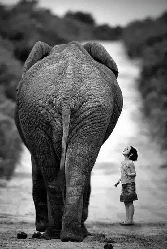 Creencias limitantes: la lucha de la pulga y el elefante