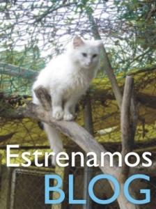 blog amigos