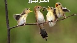 تفسير حلم العصافير في المنام للعزباء والمتزوجة والحامل