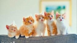 اسماء قطط ذكور واناث عربي وانجليزي
