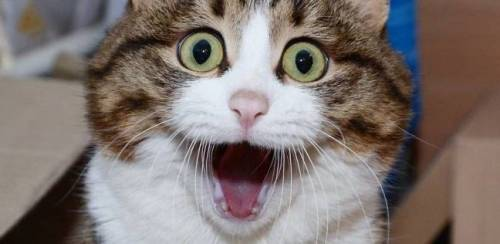تفسير حلم القطط الصغيرة الملونة في المنام