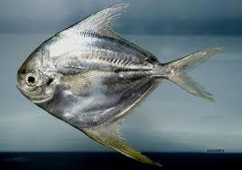 تفسير حلم السمك الفضي في المنام