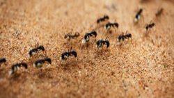 تفسير حلم النمل على الفراش في المنام