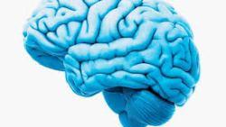 تفسير حلم الدماغ الكبيرة في المنام