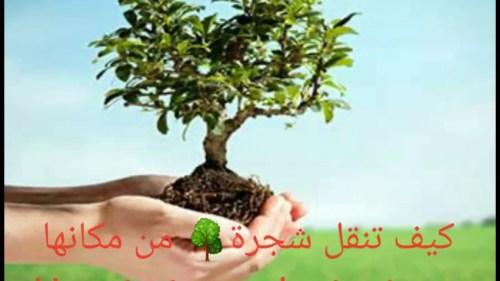تفسير حلم احتراق شجرة في المنام
