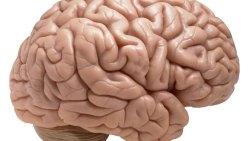 تفسير حلم عظام الدماغ في المنام