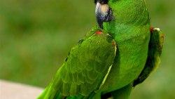 تفسير رؤية طيور الحمام في المنام