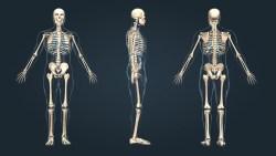 تفسير حلم أكل الهيكل العظمي في المنام