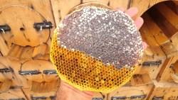 تفسير حلم العسل الأسود بالمنام