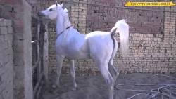 تفسير حلم الهروب من الحصان في المنام