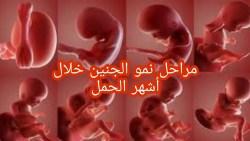 تفسير رؤية شكل الجنين في المنام للحامل