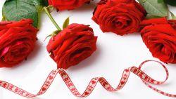 عبارات عن الورد الاحمر