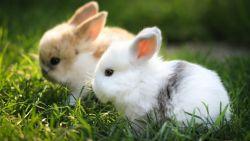 تفسير حلم الأرانب للمتزوجة