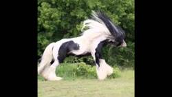 تفسير رؤية الحصان البني في المنام للمتزوجة