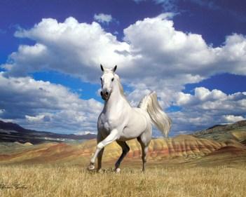 تفسير حلم حصان اسود يطاردني