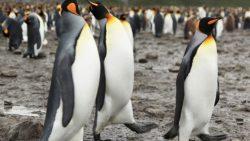 تفسير حلم البطريق للحامل