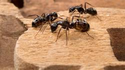 تفسير حلم النمل للمرأة الحامل