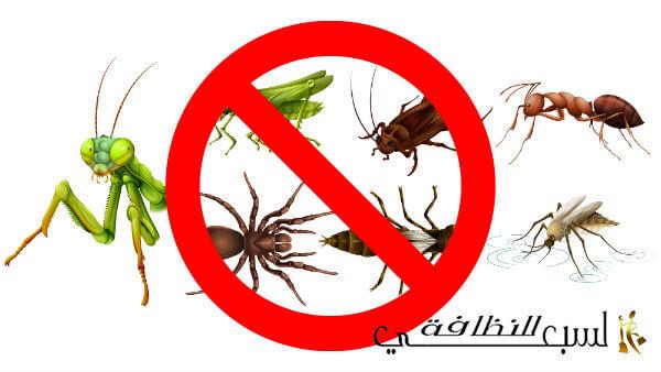 شركة مكافحة حشرات بالرياض, مكافحة حشرات بالرياض, افضل شركة مكافحة حشرات بالرياض, شركة امل السبعي لمكافحة الحشرات بالرياض