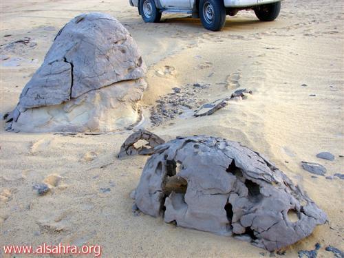 تحف احفورية
