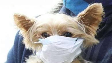 صورة إصابة كلب وثلاث قطط بكورونا