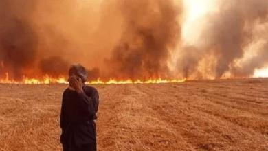 صورة الحسكة || حرائق جديدة ضخمة في المحاصيل الزراعية، ومناشدات لفرق الإطفاء بالتدخل