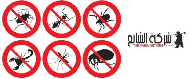 مكافحة الذباب والبعوض بالرياض