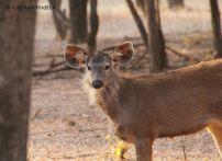 Ranthambhore National park