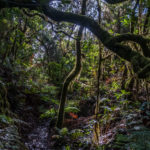 La Gomera: Walderkundungen im Bosque del Cedro