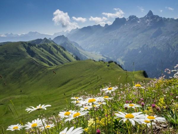 Aussicht vom Klingenstock - mit Blümchen, grünen Wiesen und Bergen