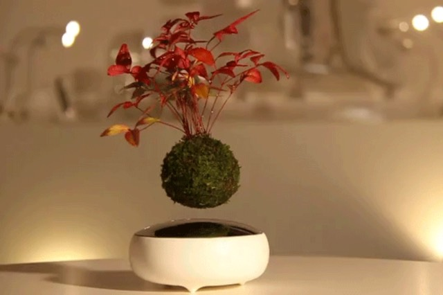 Where Buy Air Bonsai