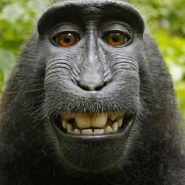 The Newest Trend – Animal Selfies?
