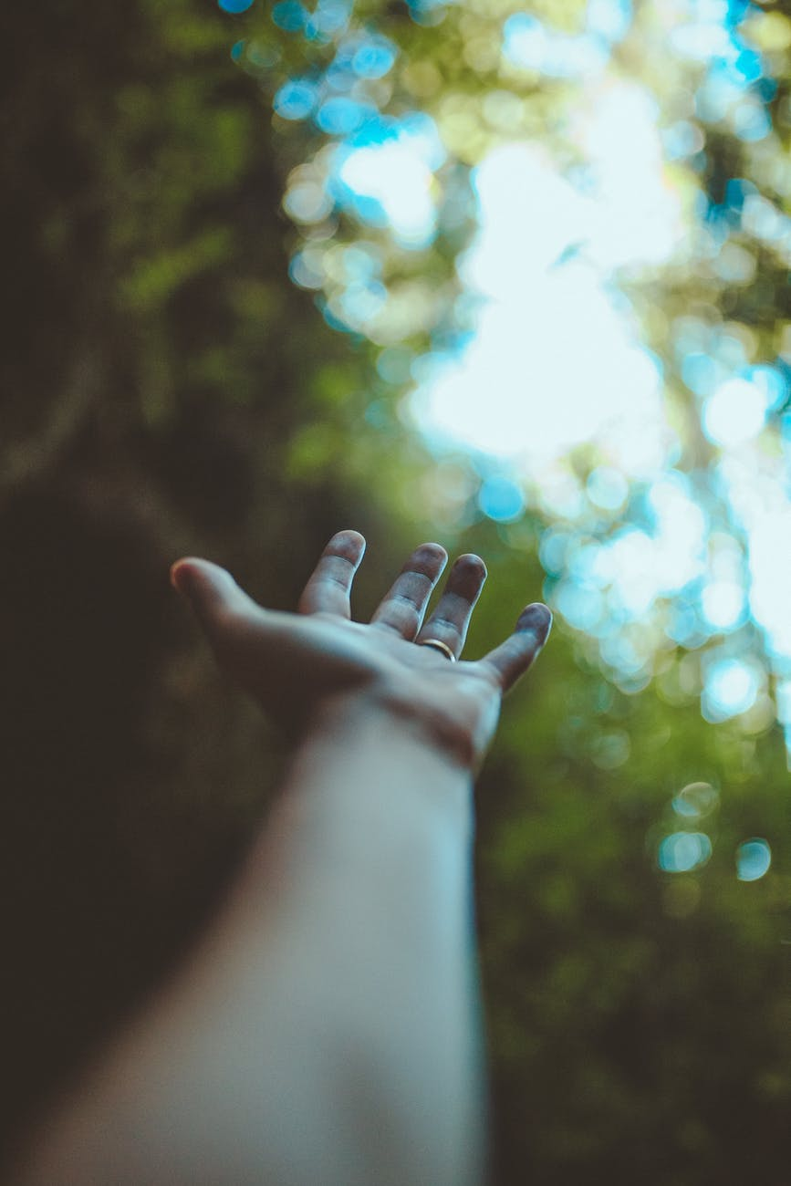 crop person outstretching hand in forest