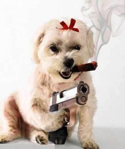 mafia-dog