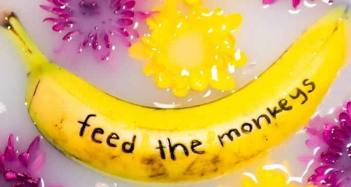 Feed the Monkeys - Shell City