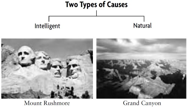 Types of Causes