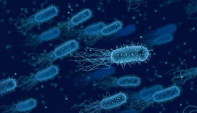 11 معلومة عن بكتيريا الوجه مرض ريهام سعيد